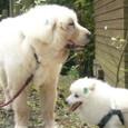 犬千代とケン